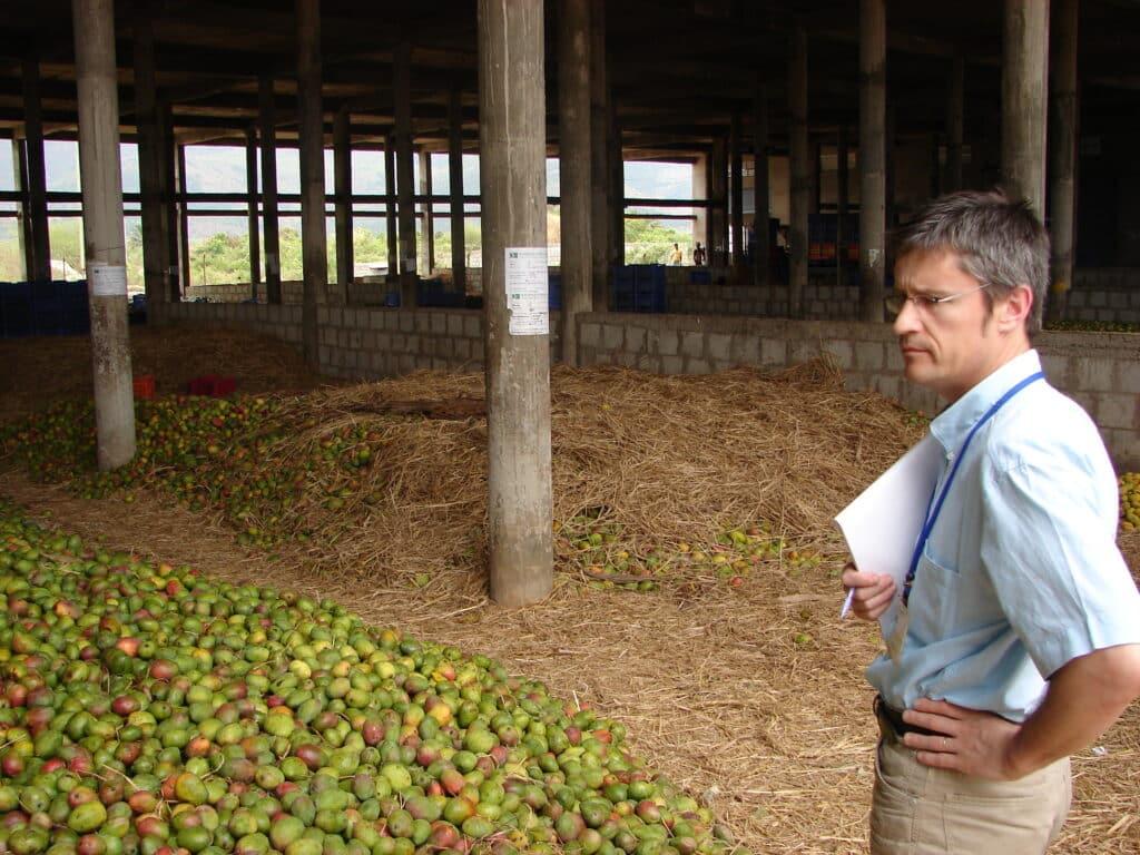 Sourcing Mangue Alphonso Inde