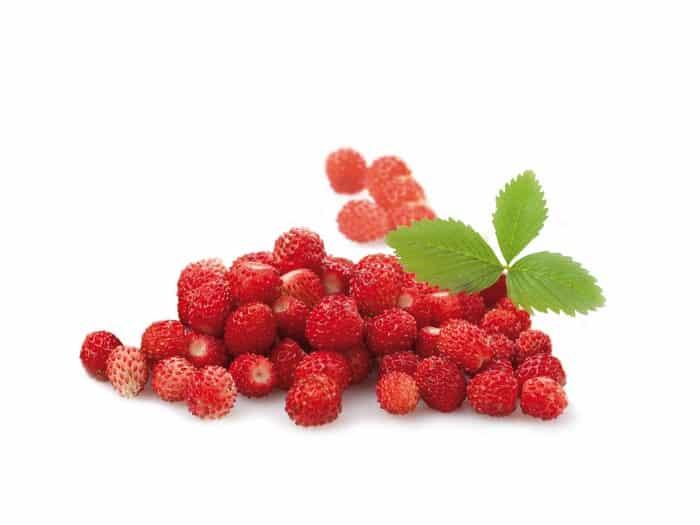 Fruit Rouge Fraise des bois